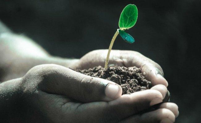 9 dicas para tornar sua empresa mais amiga do Meio Ambiente